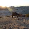 Yoga and Horse Journey in Jordan
