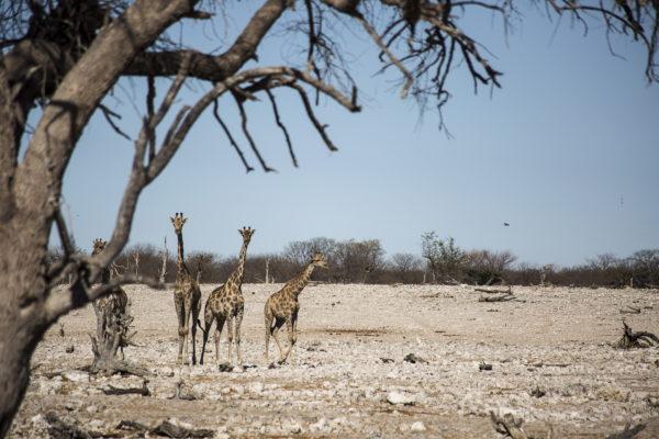 Yoga Safari Namibia retreat