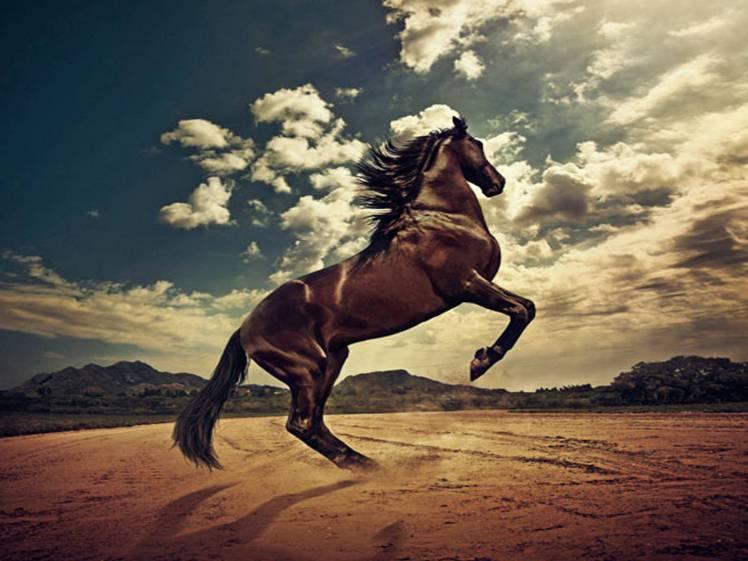 deserthorse