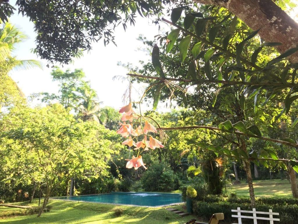 Relaxing Mind Body Detox Retreat at Plantation Villa, Sri Lanka open all year